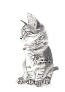 Kitten in graphite