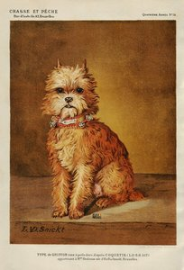 Coquette Brussels Griffon